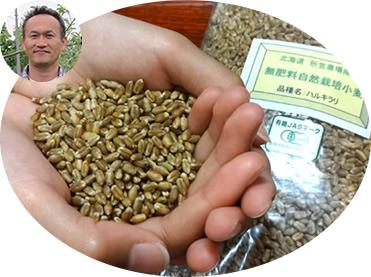 北海道 折笠農場産「ハルキラリ」(無肥料自然栽培小麦) 有機JAS認定品